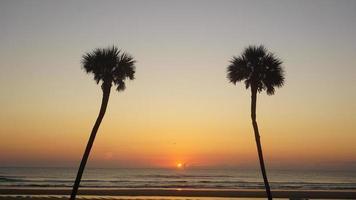 duas palmas com o nascer do sol
