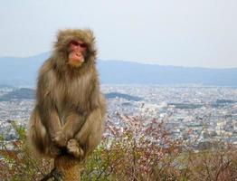 macaco da neve ansioso foto