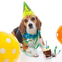 celebração do primeiro aniversário do animal de estimação foto