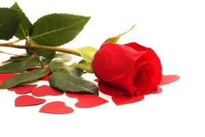 rosa e corações foto