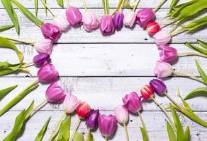 coração de tulipas frescas