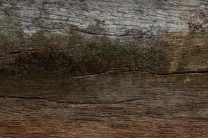 textura de madeira velha foto