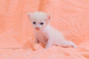 gatinho fofo em uma toalha foto