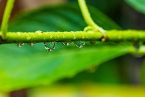 gotas de água. foto