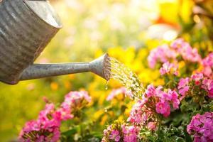 regando flores foto