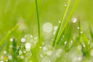 gotas de água no fundo da grama