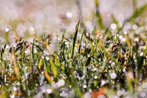 gotas de água na grama foto