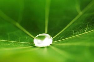 gota d'água na folha verde foto