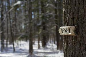 seta trilha de madeira na árvore foto
