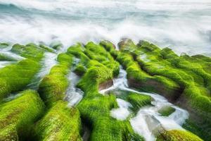 algas marinhas ao longo da linha costeira, taiwan