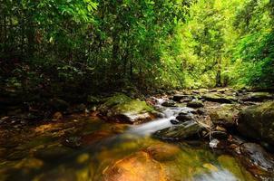 riacho de montanha