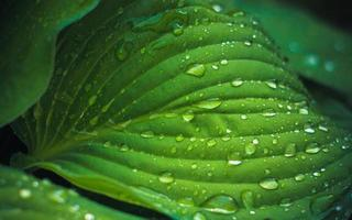 gotas de água na folha verde fresca