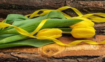 tulipas amarelas frescas com gotas de água