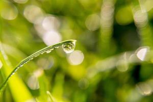 gota de água em uma folha de grama foto