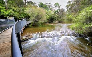 água corrente rápida na abordagem de fitzroy Falls na austrália foto
