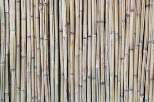 textura de madeira de bambu
