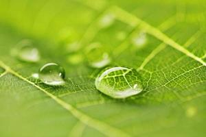 gotas de água na macro folha foto
