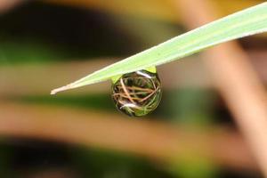 gota de água da chuva na grama
