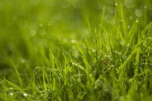 gota d'água na grama verde