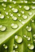folha verde com gotas de água foto