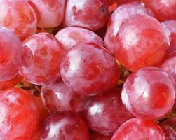 uva vermelha com gotas de água, fundo close up foto