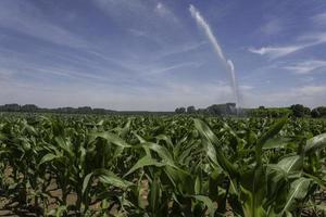 aspersor de irrigação em plantação de milho