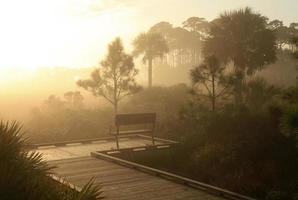 nascer do sol em uma manhã de nevoeiro em um pântano da Flórida
