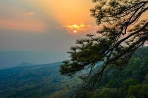 ramo de pinheiro com pôr do sol.