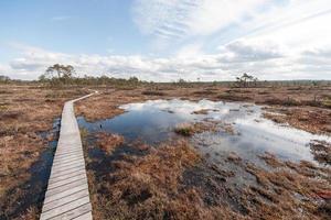 vista do pântano com árvores e calçadão