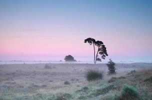 amanhecer de verão tranquilo e pinheiro solitário