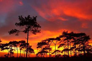 o pinheiro ao pôr do sol foto
