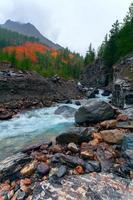 montanha pequeno rio na floresta foto