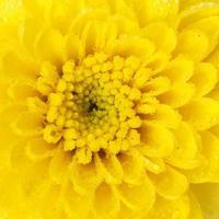close up flor com gota d'água