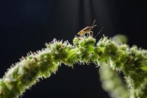 inseto em uma planta