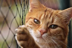 gato escalando cerca de arame