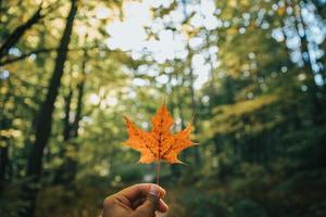 foto rasa de foco de folha de bordo marrom