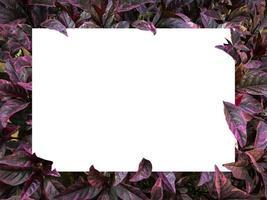 retângulo branco em branco na folhagem roxa