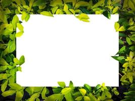 tela branca em branco sobre folhagem verde