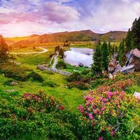 clareira com flores perto da água nas montanhas