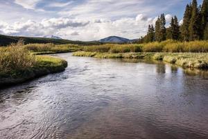 Riacho de truta do interior de Yellowstone