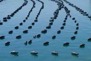 fazenda de peixes marinhos de águas abertas perto de Primosten foto