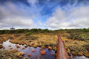 trilha do pântano de alakai foto
