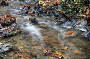riacho de outono foto