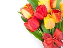tulipas coloridas frescas com fita e arco