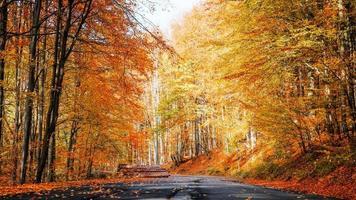 estrada através da floresta na temporada de outono