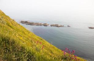 flores silvestres e mar