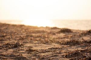 pôr do sol no mar com algas