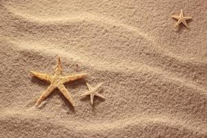 conchas do mar com areia como pano de fundo foto