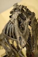 fóssil de dinossauro foto