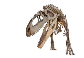 esqueleto de giganotossauro isolado foto